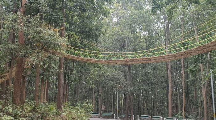 جانوروں اور کیڑے مکوڑوں کیلیے منفرد پل تعمیر