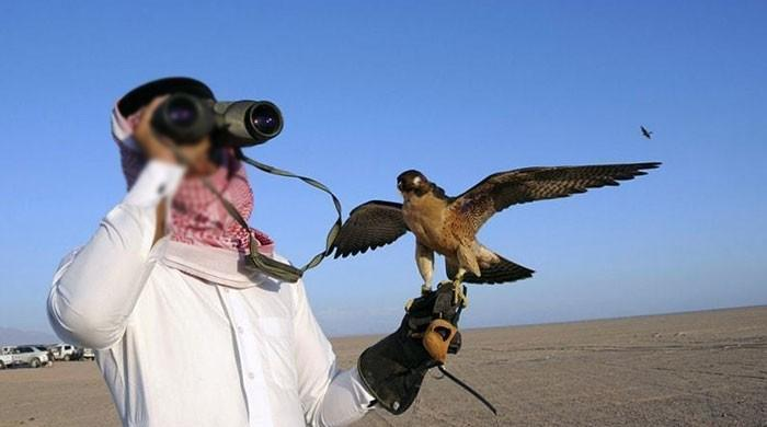 اماراتی شاہی خاندان کیلئےبازکے ایکسپورٹ پرمٹ جاری کرنے پردفترخارجہ سے جواب طلب