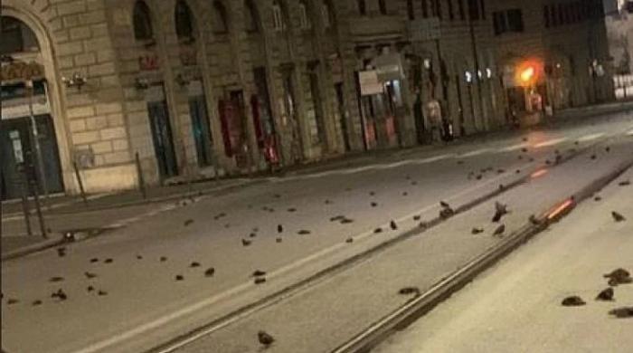روم کی سڑکوں پر سیکڑوں پرندے مردہ حالت میں کیوں پائے گئے؟