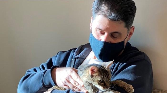 15 سال قبل کھو جانے والی بلی مالک کو واپس مل گئی