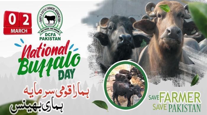 بھینس کا قومی دن