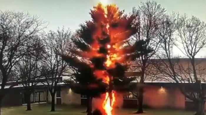 ویڈیو: آسمانی بجلی گرنے سے درخت کے زمیں بوس ہونے کا منظر