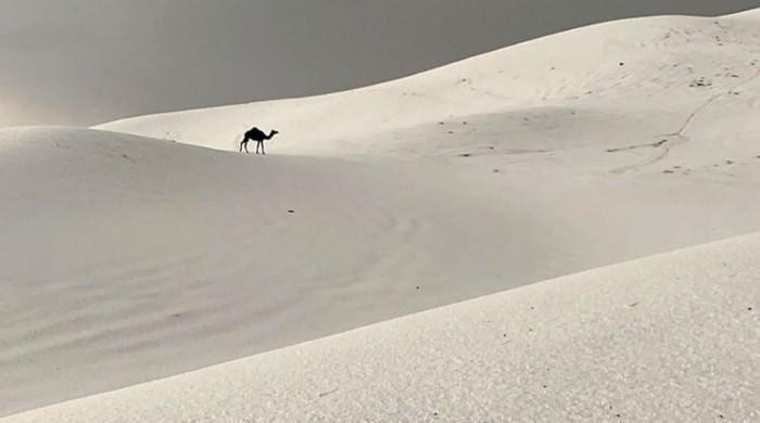 سعودی عرب میں شدید برف باری کے بعد حسین نظارے