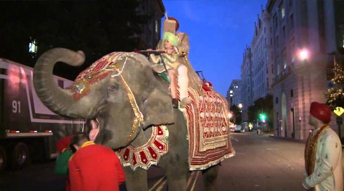 غصیلے ہاتھی نے شادی کی تقریب تہس نہس کردی،دولہا بھاگنے پر مجبور