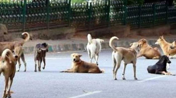 کراچی میں آوارہ کتوں نے ایک اور شخص کی جان لے لی