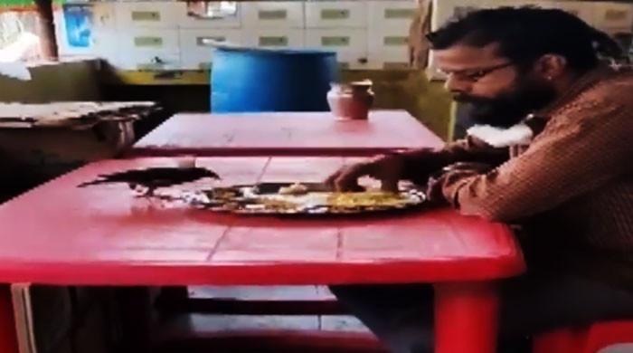 ایک شخص اور چڑیا کی ایک ہی پلیٹ سے کھانا کھانے کی ویڈیو وائرل