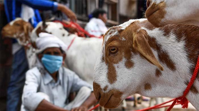 حیدرآباد: مسلح افراد قربانی کے درجنوں جانور چھین کر فرار