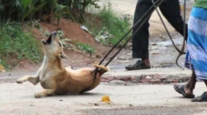 کتے کو تشدد سے ہلاک کرنیوالا شخص گرفتار
