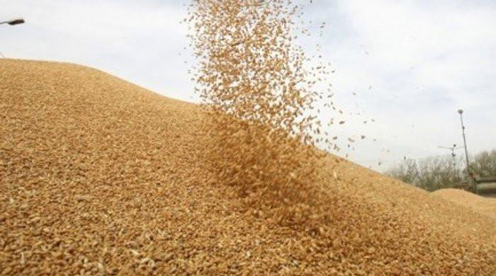 یوکرین سے 8 لاکھ ٹن گندم کی خریداری میں رکاوٹ آگئی