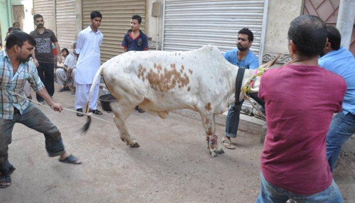 کہیں گائے، بیل اور بکروں کی قربانی کی گئی تو کہیں اونٹوں کو قربان کیا گیا— فوٹو:فائل
