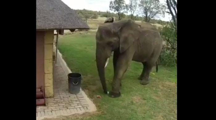 ہاتھی کی کچرا کوڑے دان میں ڈالنے کی ویڈیو وائرل