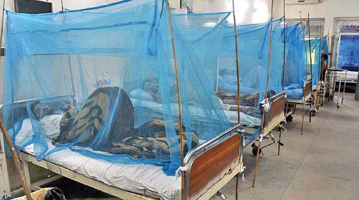 پنجاب میں کورونا کے ساتھ ڈینگی بھی سر اٹھانے لگا