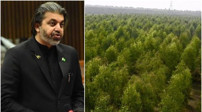 'گوگل ارتھ پر جا کر لگائے گئے درخت دیکھ سکتے ہیں'، علی محمد خان کا اپوزیشن کو جواب