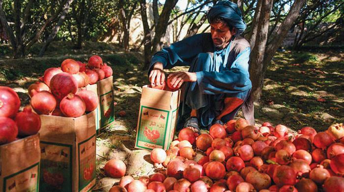 پاکستان نے افغانستان سے پھلوں کی درآمد پر سیلز ٹیکس ختم کردیا
