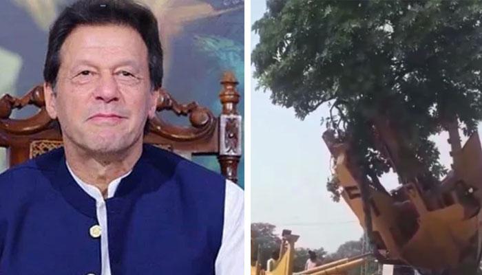 ہماری حکومت درختوں کے تحفظ کے لیے پر عزم ہے اور ہر درخت کو بچایا جا رہا ہے: وزیراعظم/ فوٹو انسٹاگرام