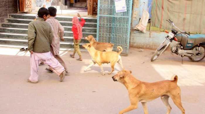 سندھ میں کتوں کے کاٹنے کے واقعات میں مسلسل اضافہ