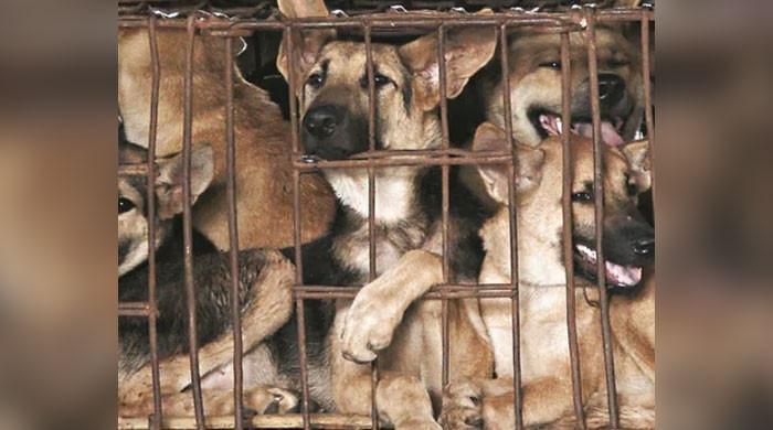 عدالت نے کتوں کا گوشت فروخت کرنیوالے تاجر کو سزا سنادی